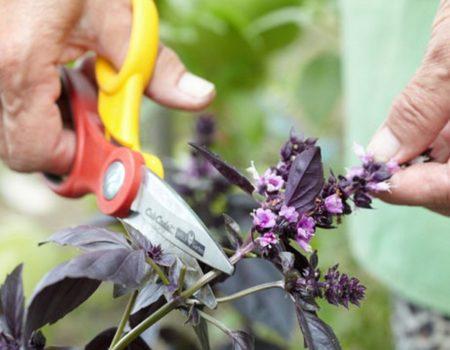 Удаление цветков