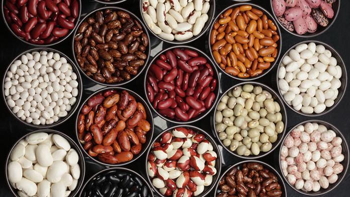 Как вырастить источник белка - фасоль
