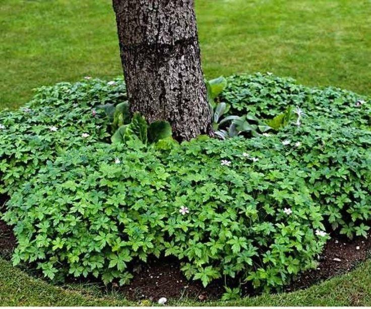 Как бороться с плодожоркой в саду - эффективные методы