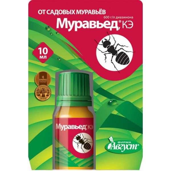 Эффективные методы для выведения муравьев из теплицы