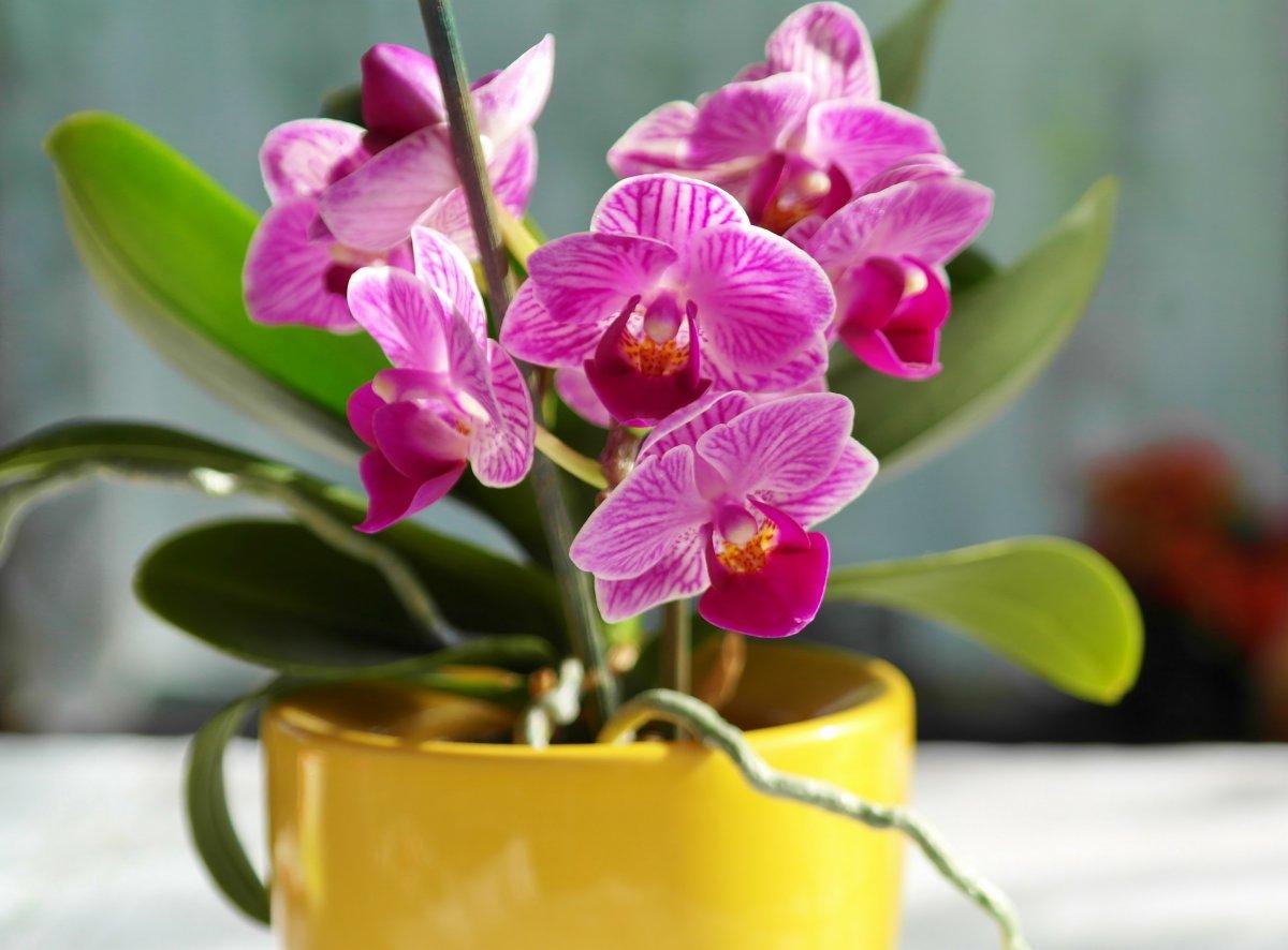 Интересные факты о выращивании орхидей