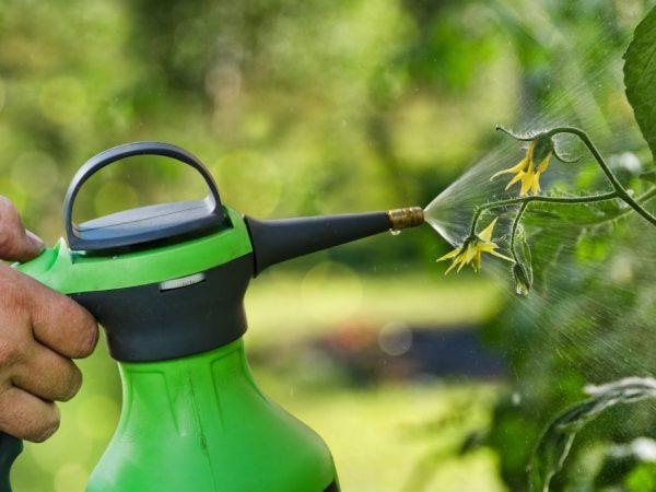Перекись водорода - незаменимое средство для сада и огорода