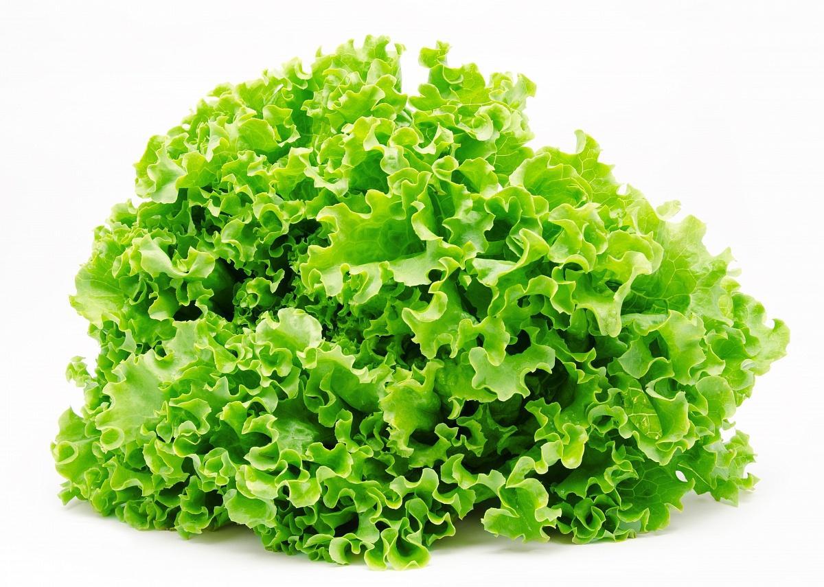 Советы по выращиванию полезного салата в своем огороде