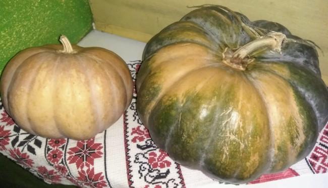 5 самых вкусных сортов тыквы