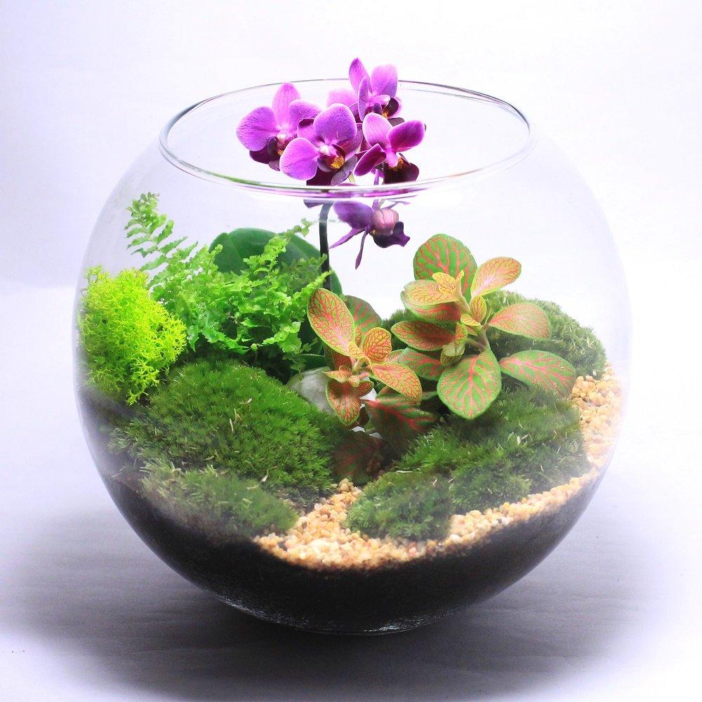 Виды горшков и вазонов для посадки суккулентов и кактусов без необходимости постоянного полива