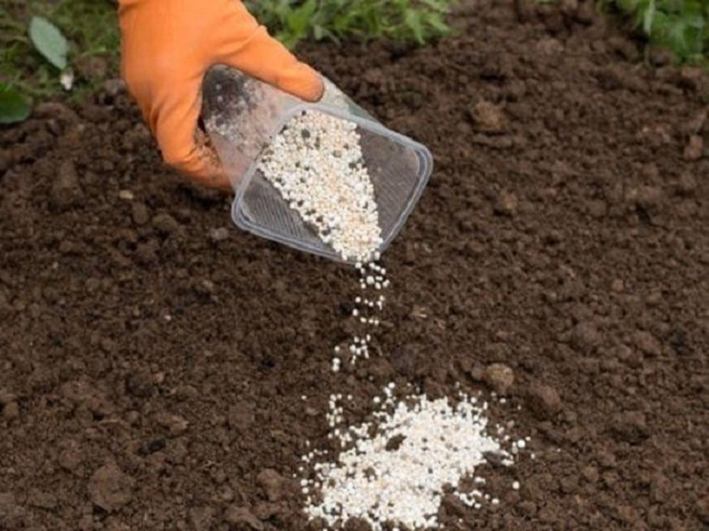 Особенности выращивания культур для получения двух урожаев