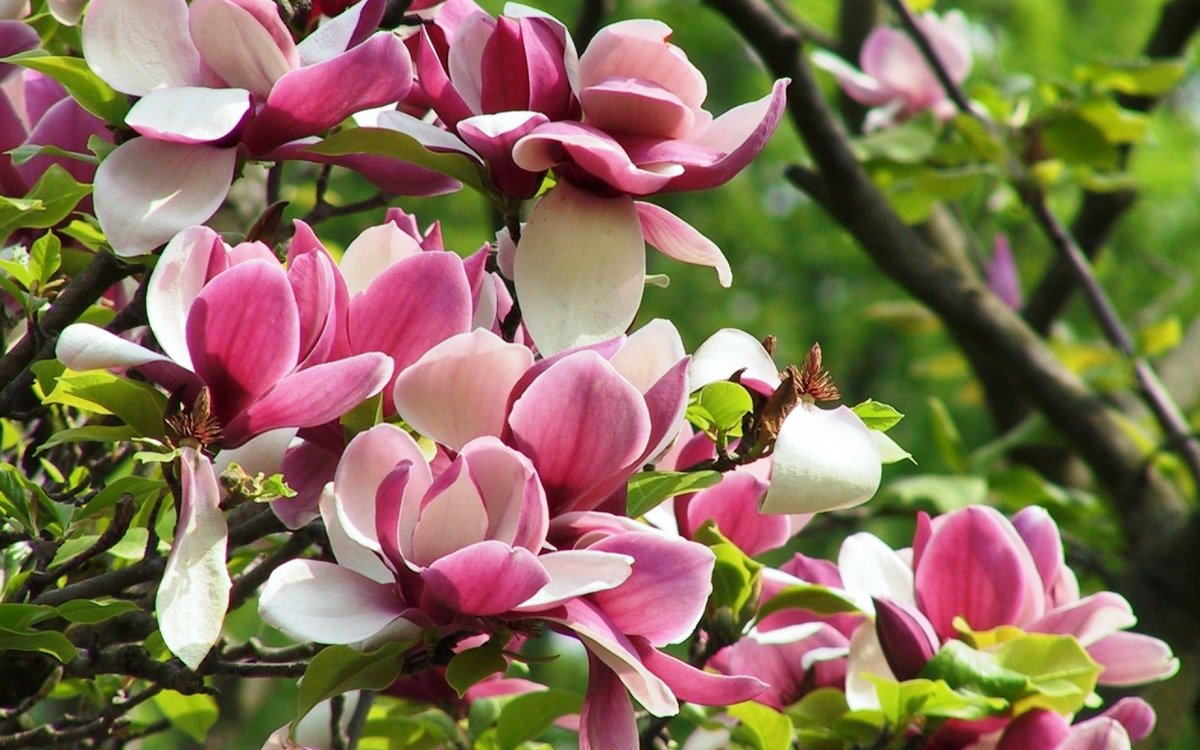 Необычные цветы сделают из дачного участка райский уголок