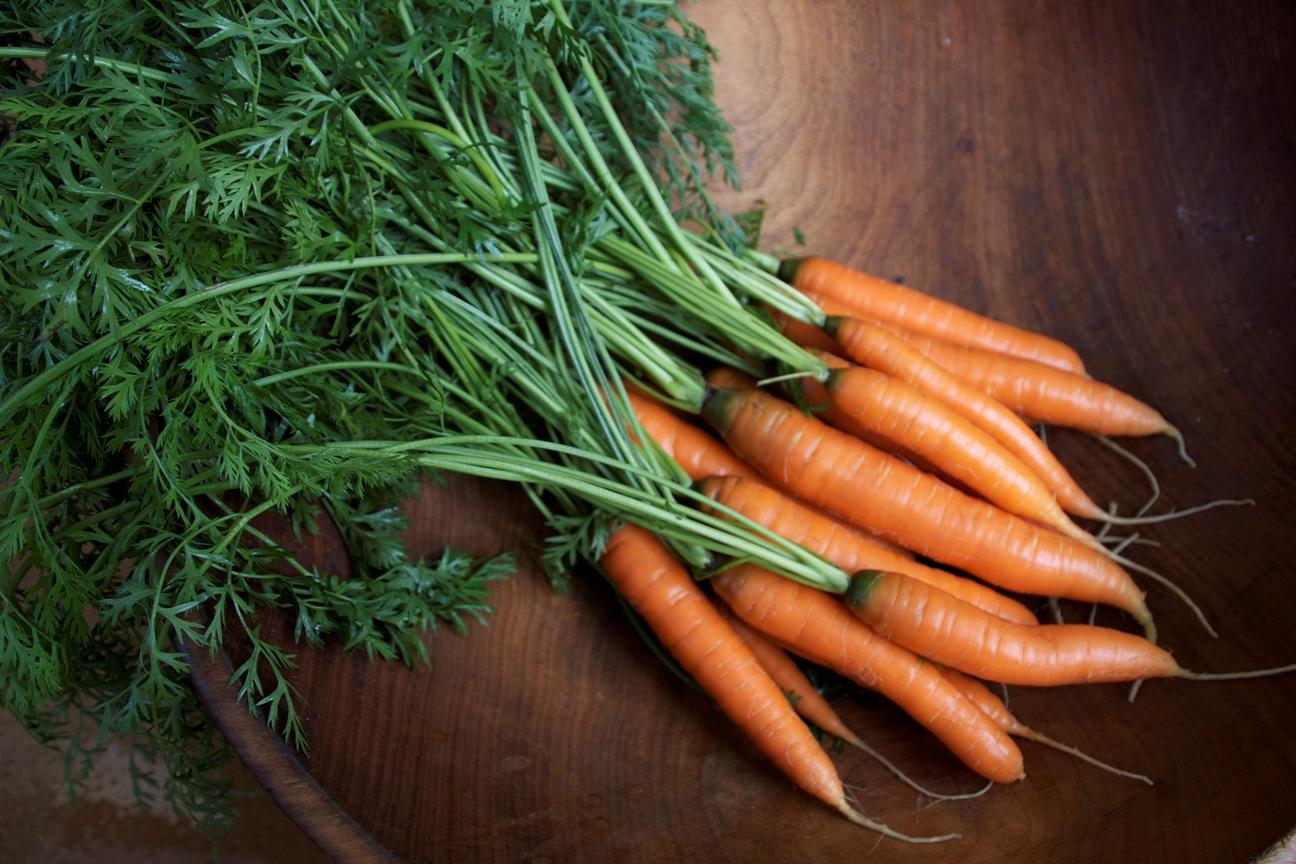 Эффективный метод для быстрого прорастания семян моркови - через 4-5 дней