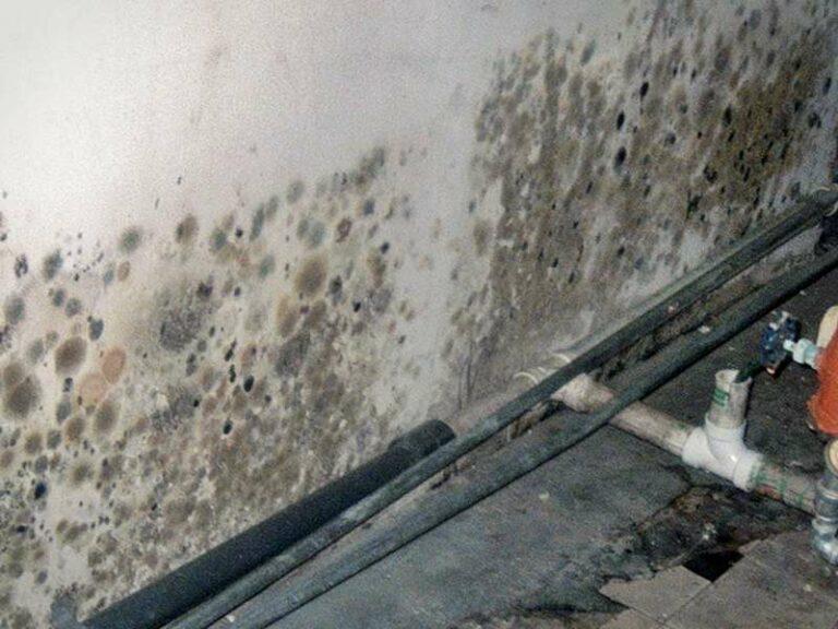 как избавиться от влажности в подвале