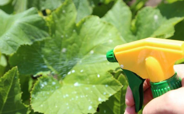 Почему желтеют листья на огурцах и как этого избежать