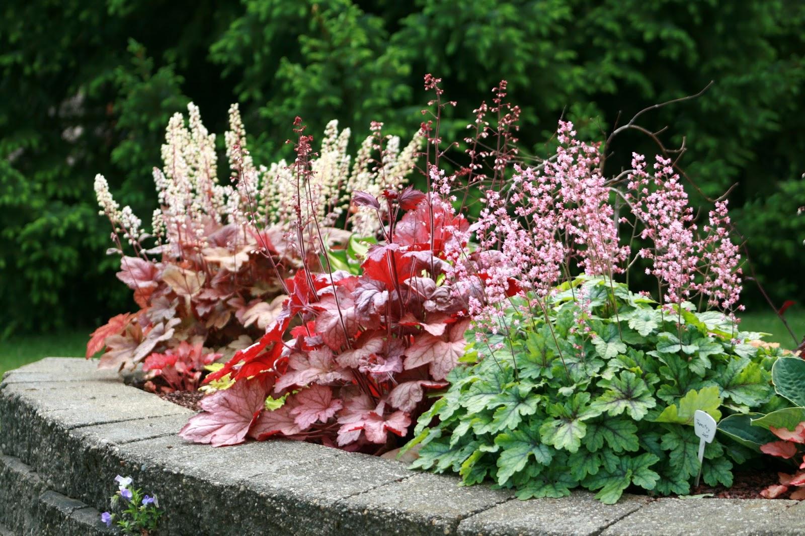 5 неприхотливых многолетников для тенистых уголков сада