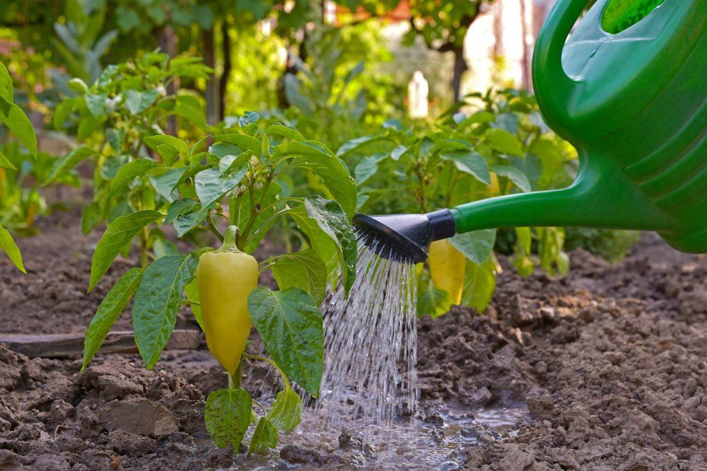 Горчица в помощь садоводам-огородникам вместо химикатов