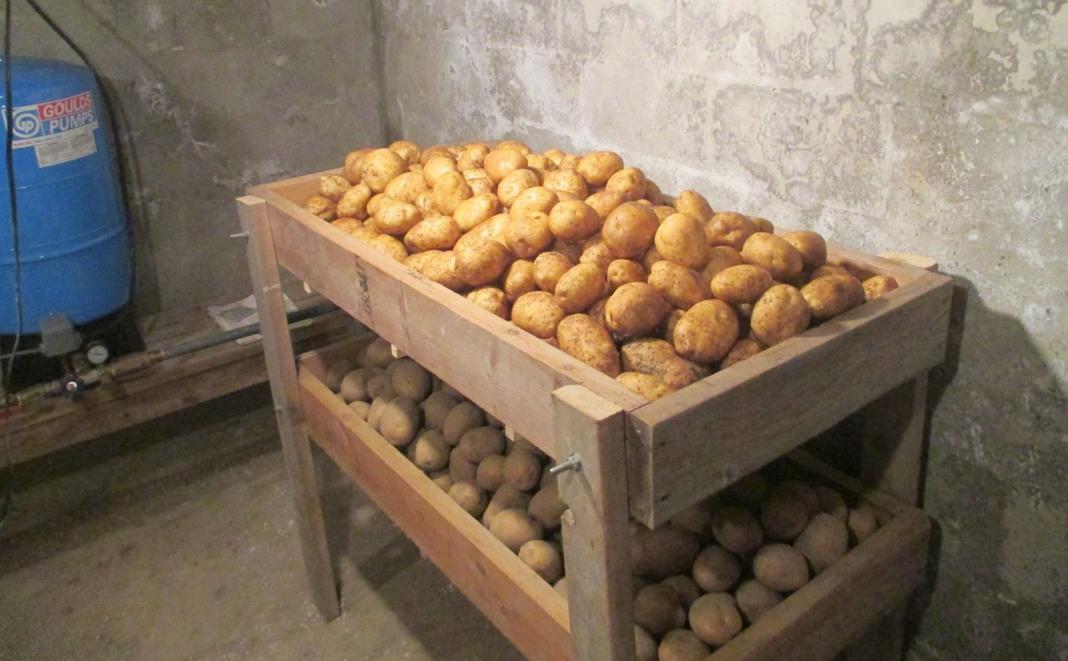 Картофель – собираем и храним урожай