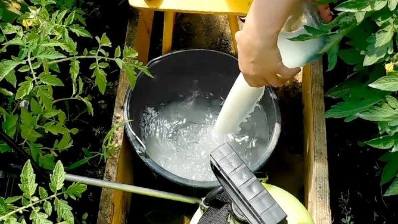 Какие продукты питания можно использовать в огородничестве?