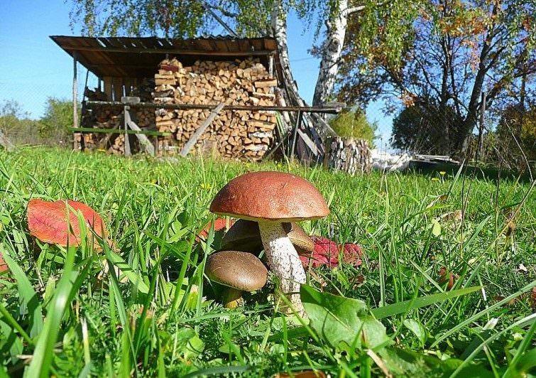 Как вырастить грибы на приусадебном участке?