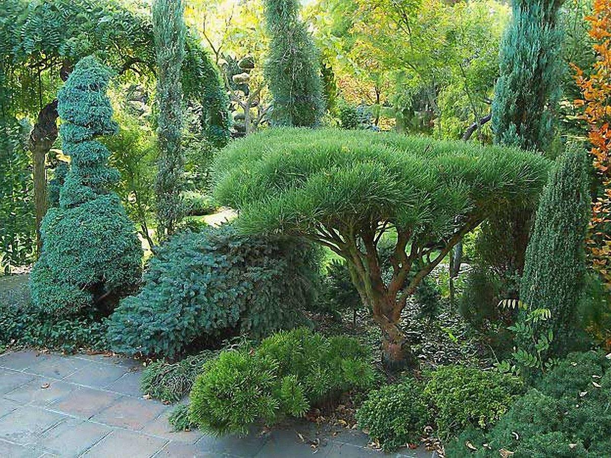 Как обустроить маленький сад? 15 идей для визуального расширения пространства