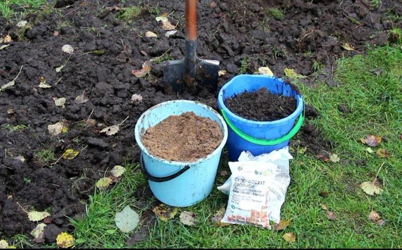 Как песчаную почву сделать плодородной