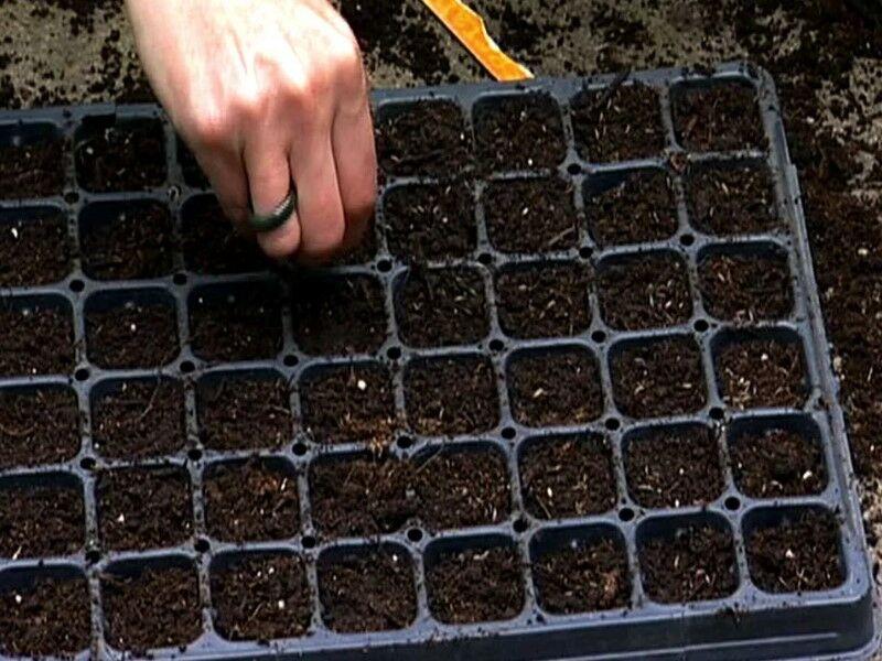 Благоприятные дни для посева капусты на рассаду по луне в 2020 году