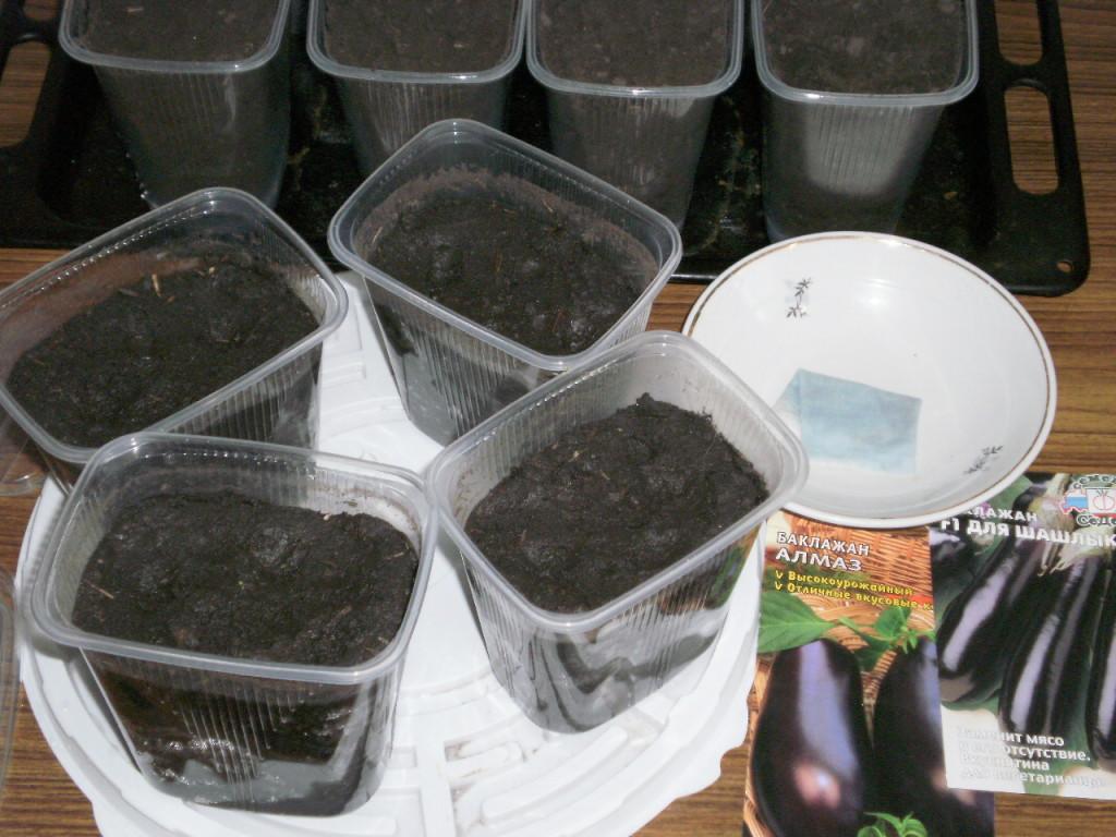 Когда сеять баклажаны на рассаду в 2020 году, благоприятные дни по лунному календарю