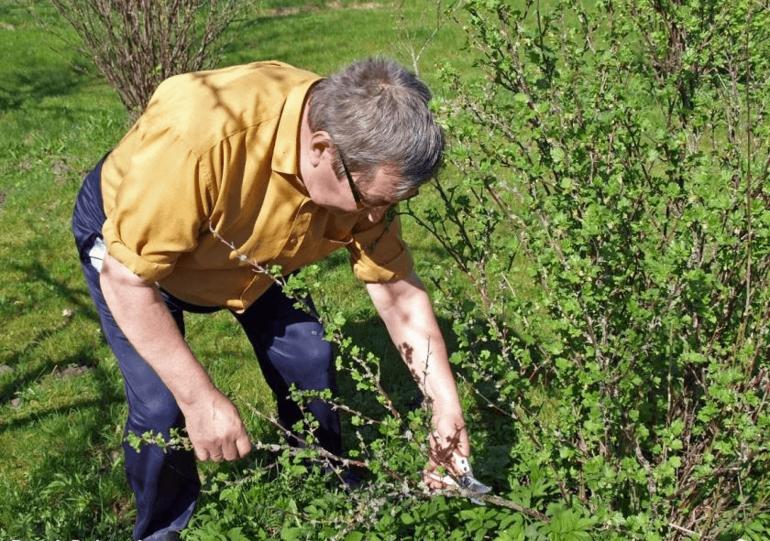 Лунный посевной календарь на март 2020 года садовода и огородника, таблица