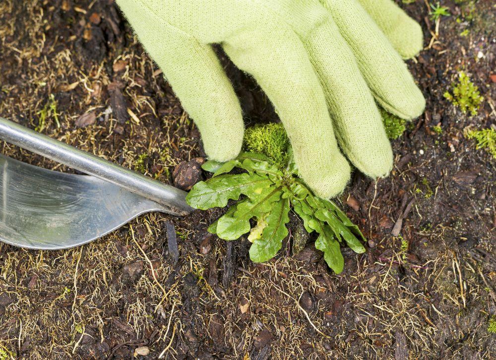 Удаление сорной травы