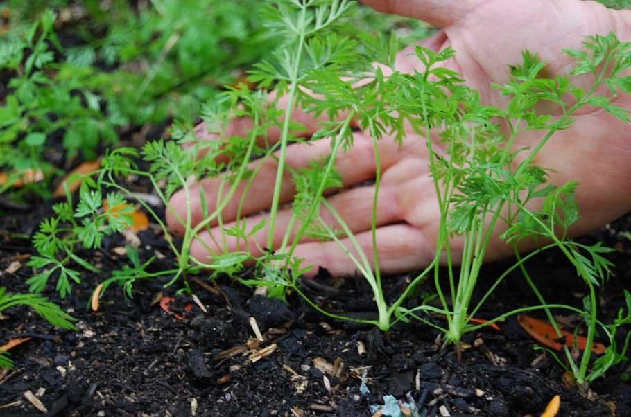 Посевной календарь на май 2020 года для садоводов и огородников