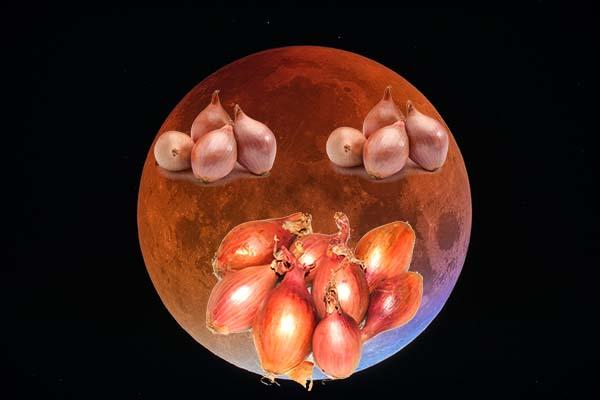 Благоприятные дни для посадки лука Эксибишен в 2021 году по лунному календарю