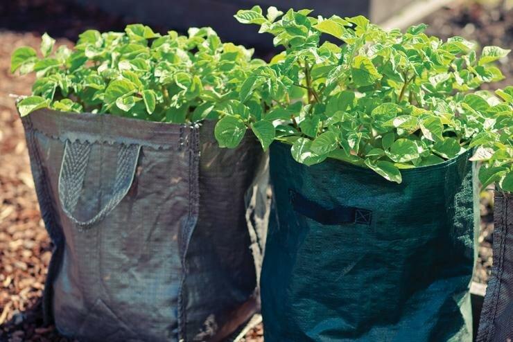 Когда сажать картошку в мае 2021, лунный календарь посадки картошки