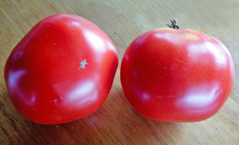 Самые урожайные сорта семян томатов (помидор) для Сибири на 2021 год