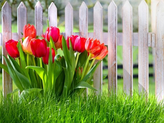 Посадка тюльпанов в 2021 году: когда сажать, сроки, благоприятные дни