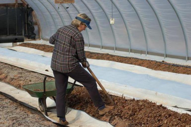 Когда садить огурцы на рассаду в 2021 году для теплицы по лунному календарю