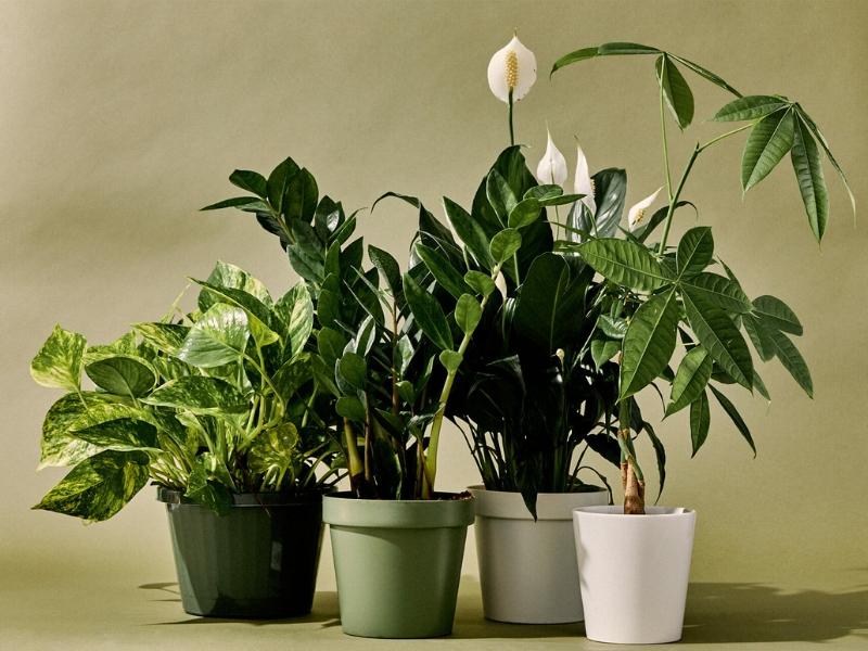 Календарь комнатных растений