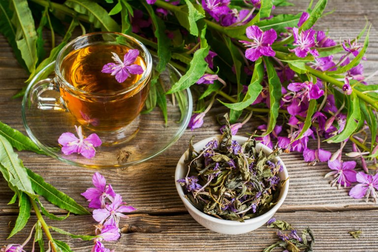 Иван-чай (кипрей) – сбор и заготовка в 2021 году: как собирать, заготавливать и сушить