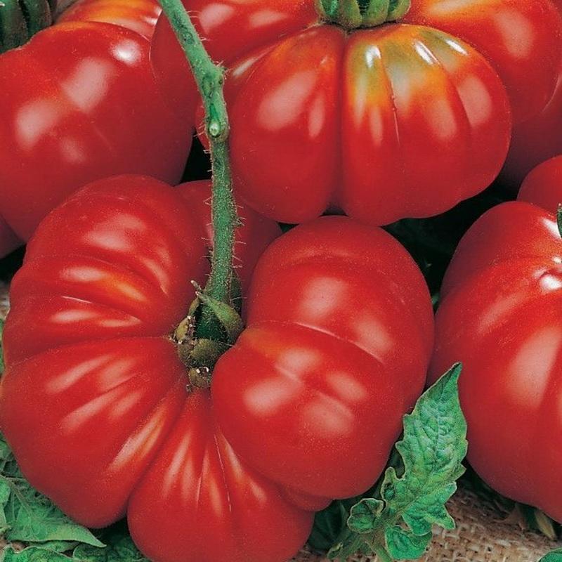 Кистевые томаты: описание и характеристики лучших сортов, выращивание с фото