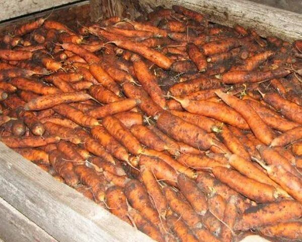 Как сушить морковь в духовке, сохраняя витамины
